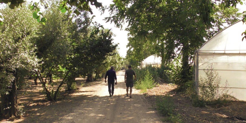 Die geografische Nähe zum Vesuv bietet fruchtbare Böden